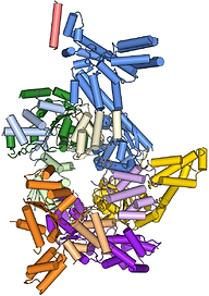 Crystal structure of the origin recognition complex (ORC).
