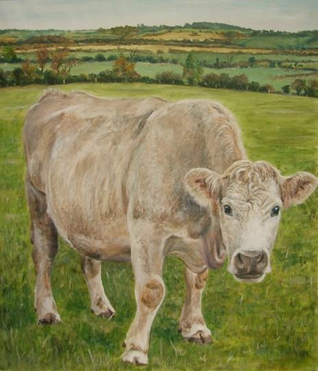 Curious Cow.jpg