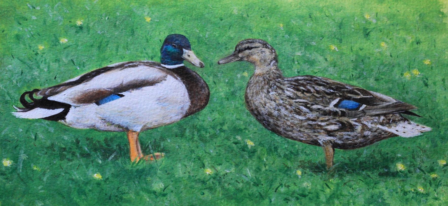 2 ducks.jpg