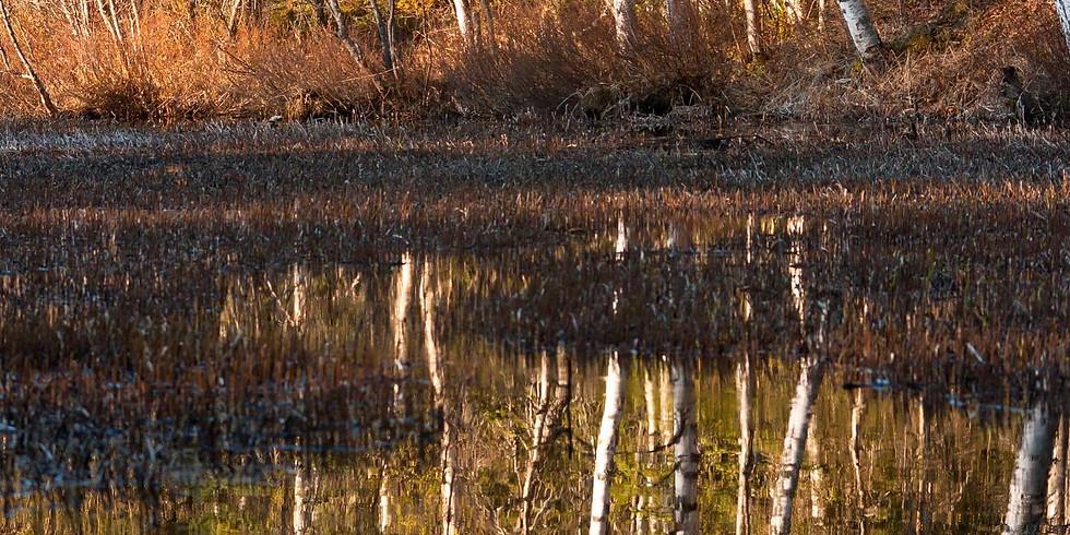 Speak up for MatSu Wetlands!