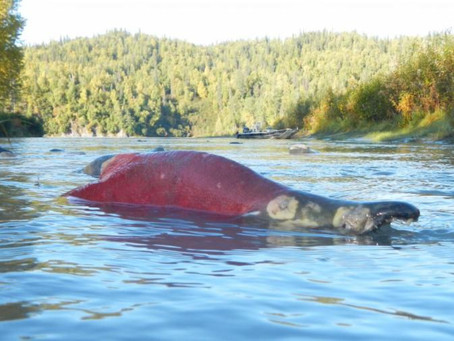 Salmon Need Water!   Water Rights & Wetlands Mitigation