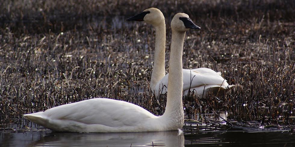 Supplemental Wetlands Mitigation Ordinance