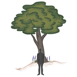 treefig-only.png