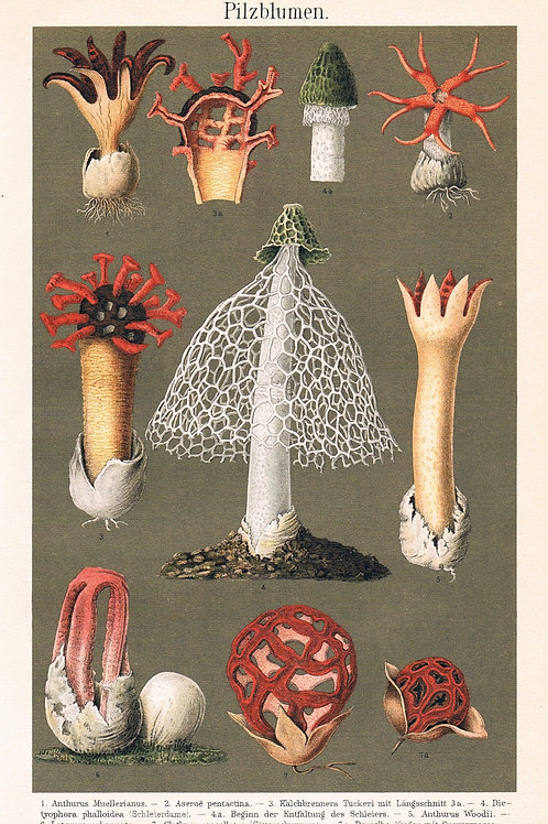 Pilzblumen
