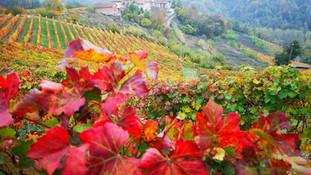 Gran Tour delle Langhe e Monferrato 3 giorni