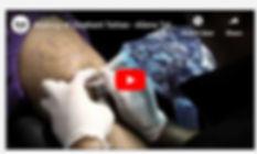 Elephant Tattoo Video