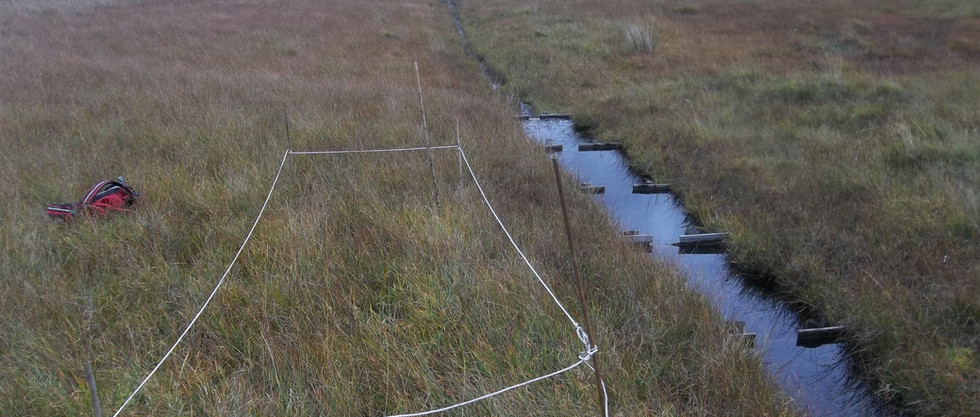 Monitoring the effects of ditches on peat bogs in Snowdonia