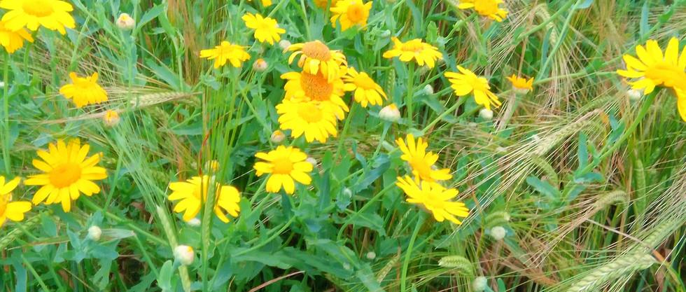 Arable plant monitoring