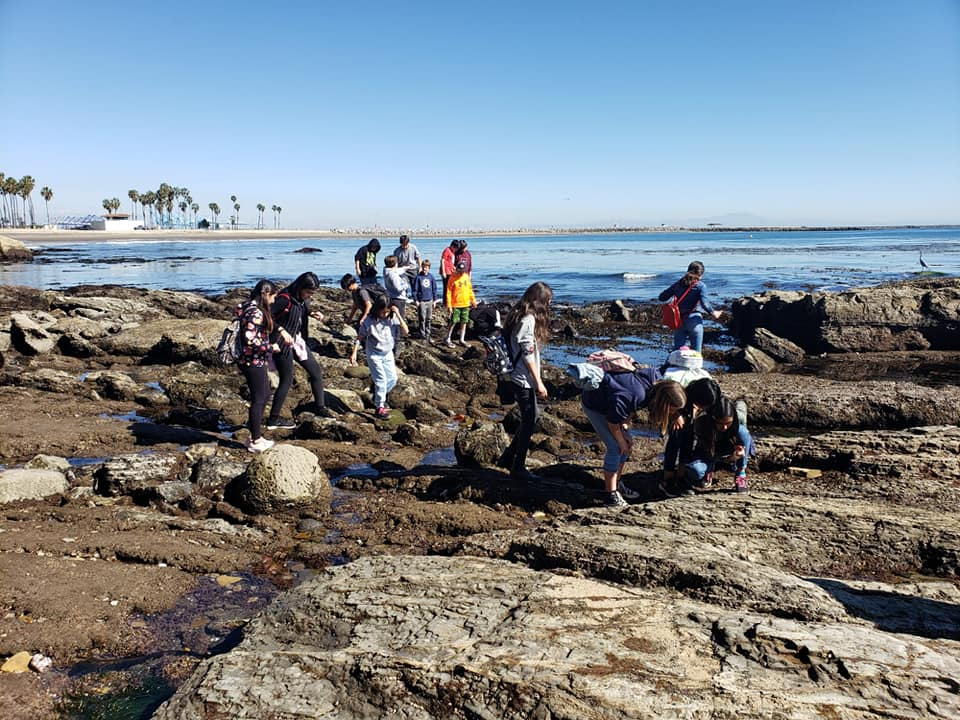 Cabrillo field trip at tide pools 2020