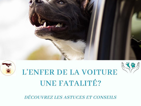 Découvrez les astuces pour ne plus que la voiture soit un enfer pour votre chien et pour vous