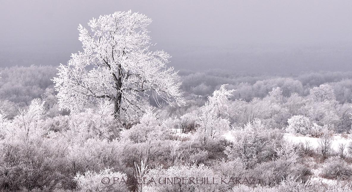 Heavy Hoar Frost