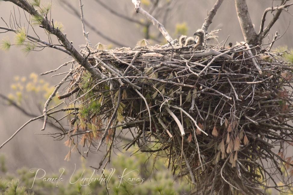 Misty Nest
