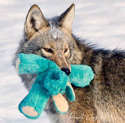 The Toy Thief III