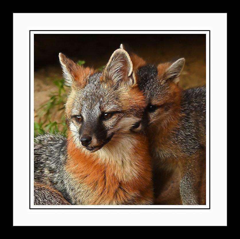 FoxHugframed.jpg