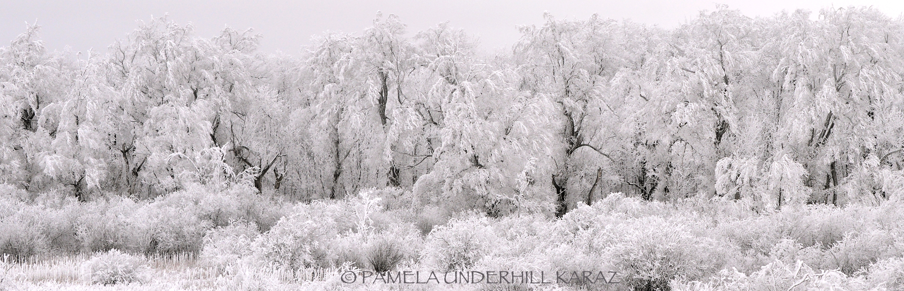 Hoar Frost Laden Trees