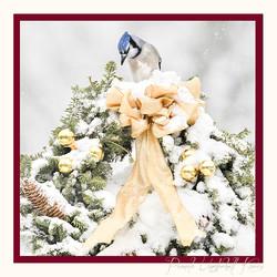 Blue Jay and Wreath 5x5