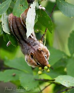 Green Berries - Chippy