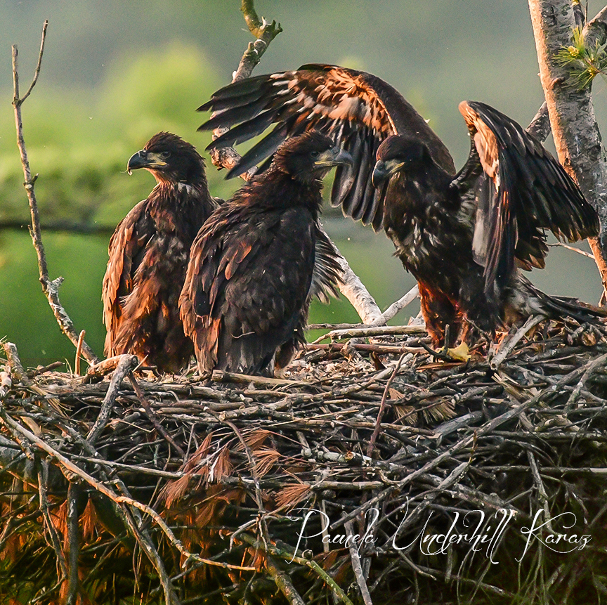 The Three Eaglets - Sunrise