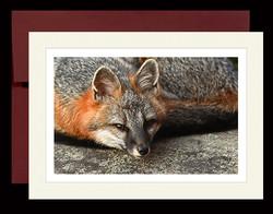 foxcard2
