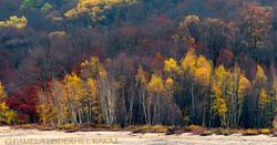 Hinckley Lake Fall Trees