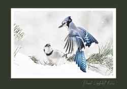 Blue Jay 2 card