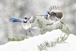 Snowy Day Blues