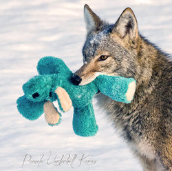 The Toy Thief II