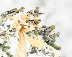 Goldfinch III H