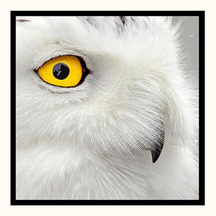 Close Up 5x5