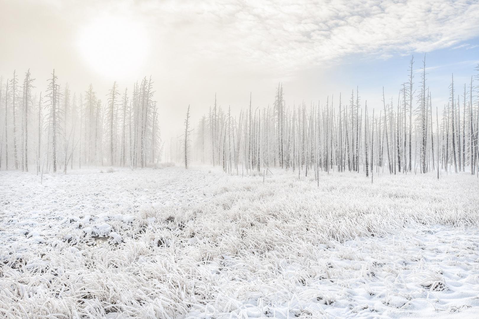 Moring Mist II, Yellowstone