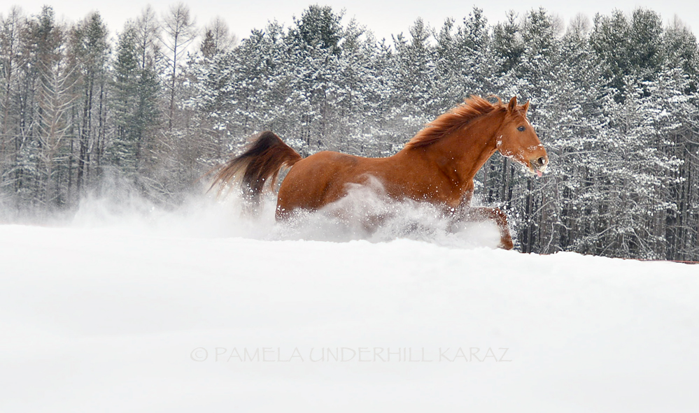 Dashing Through the Snow