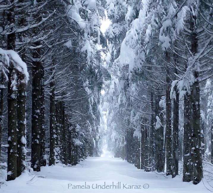 Porcupine Woods