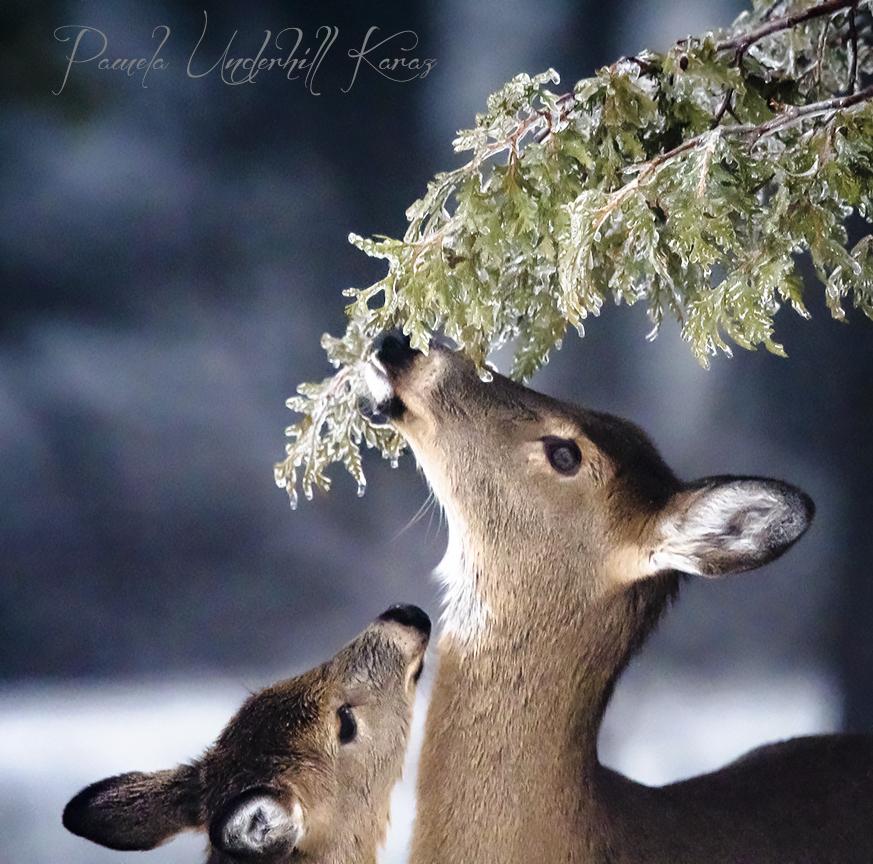 The Cedar Branch