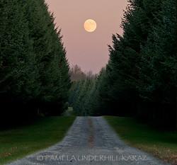 Full Moon Evergreens