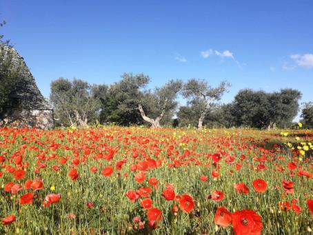 #staycation: come viaggiare e scoprire la Puglia senza uscire di casa