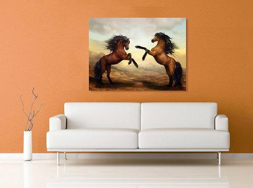 Braon konji