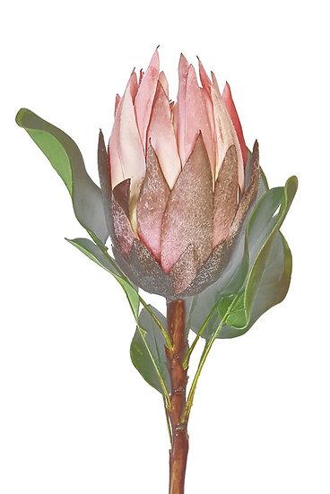 Protea Pink Faux Flower Silk Flower Artificial Flower