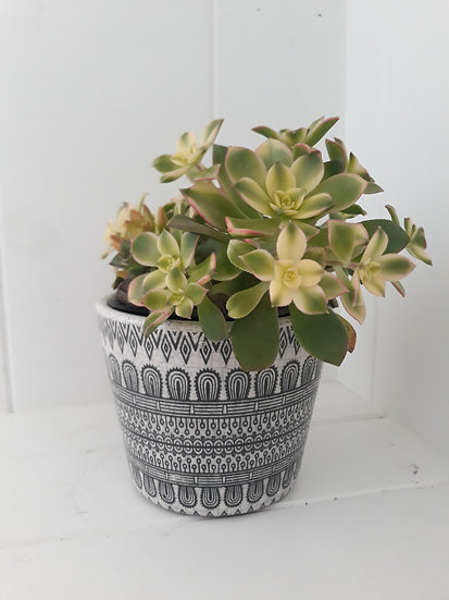 Black and White Indoor Pot 04