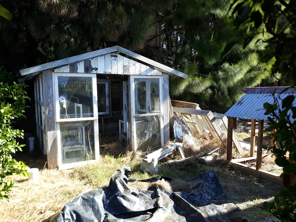 The area we are transforming containing greenhouse sitting their for 9 years, and the beginning of our chookhouse in the corner