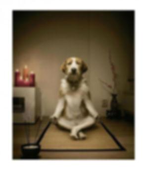 meditating-dog-650x795.jpg