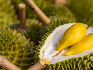 Durian Solutions