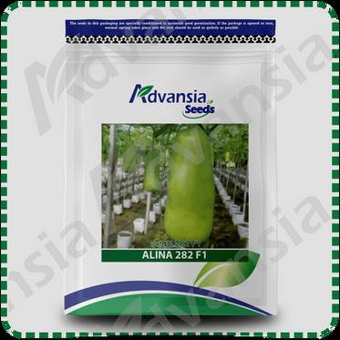 Bottle Gourd Alina 282 F1