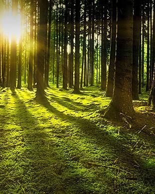 EvergreenCoffins_13.jpg