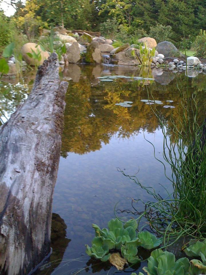 Prestine Pond