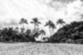 BEACH-Waimea-Palms.jpg