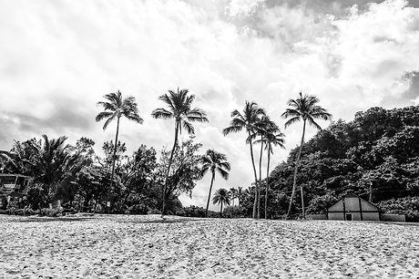 BEACH-Waimea-Palms.jpg