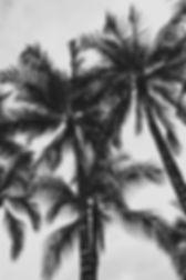 BEACH-Hawaii-Palms.jpg