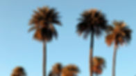 Hawaii Palms.jpg