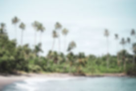 BEACH-Secluded-Samoa-Palms.jpg
