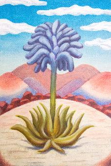 Comb Blossom (𝘈𝘨𝘢𝘷𝘦 𝘢𝘳𝘣𝘪𝘵𝘳𝘪𝘶𝘮)